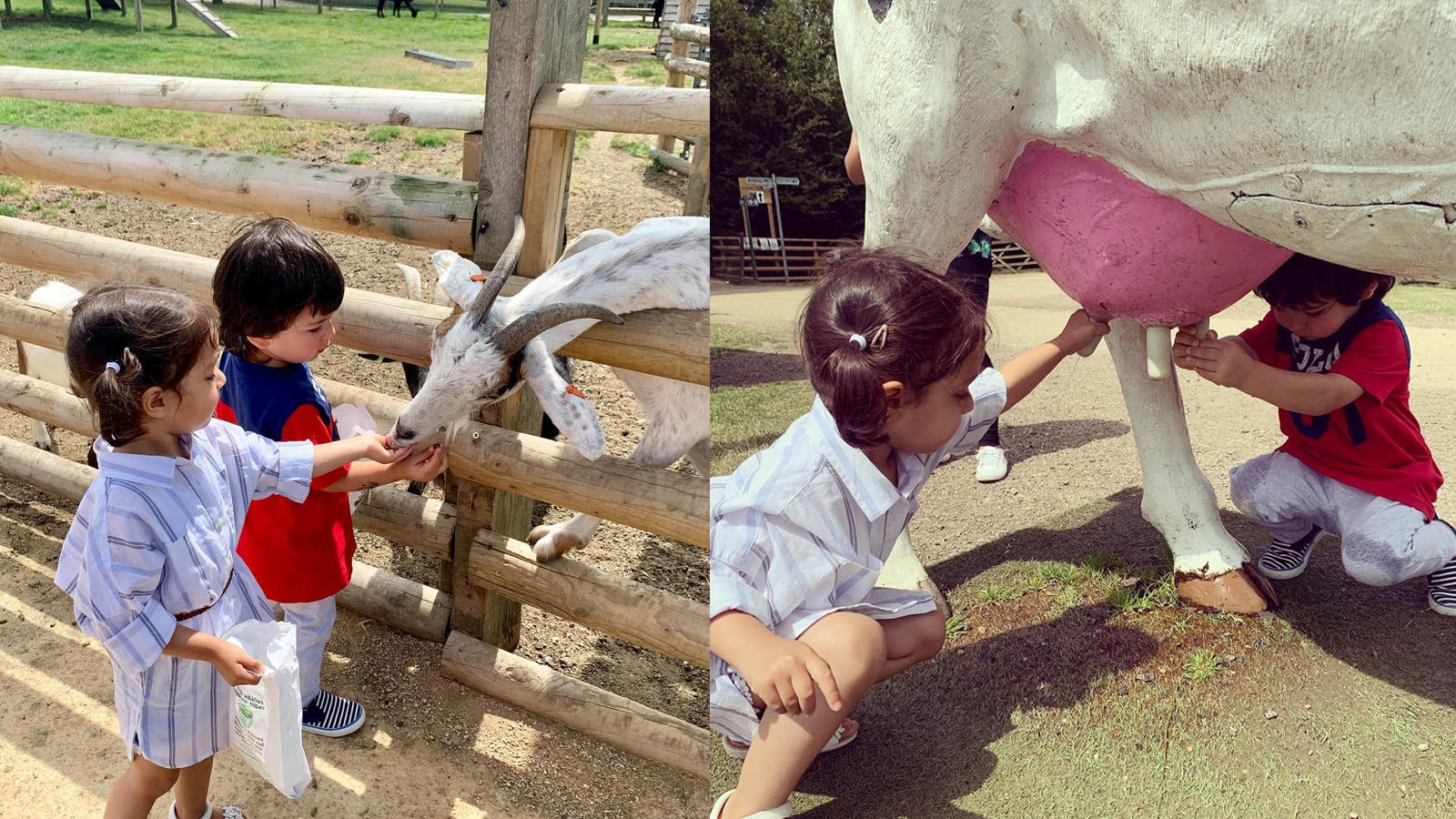 Taimur Ali Khan enjoys farm life in London, gets overjoyed as he feeds a baby goat with buddy Kainat