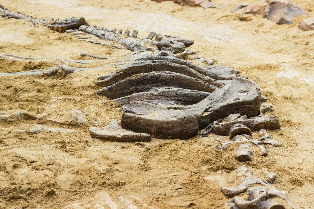 Gigantic 500 Kg Dinosaur Bone Found In France Belongs To The