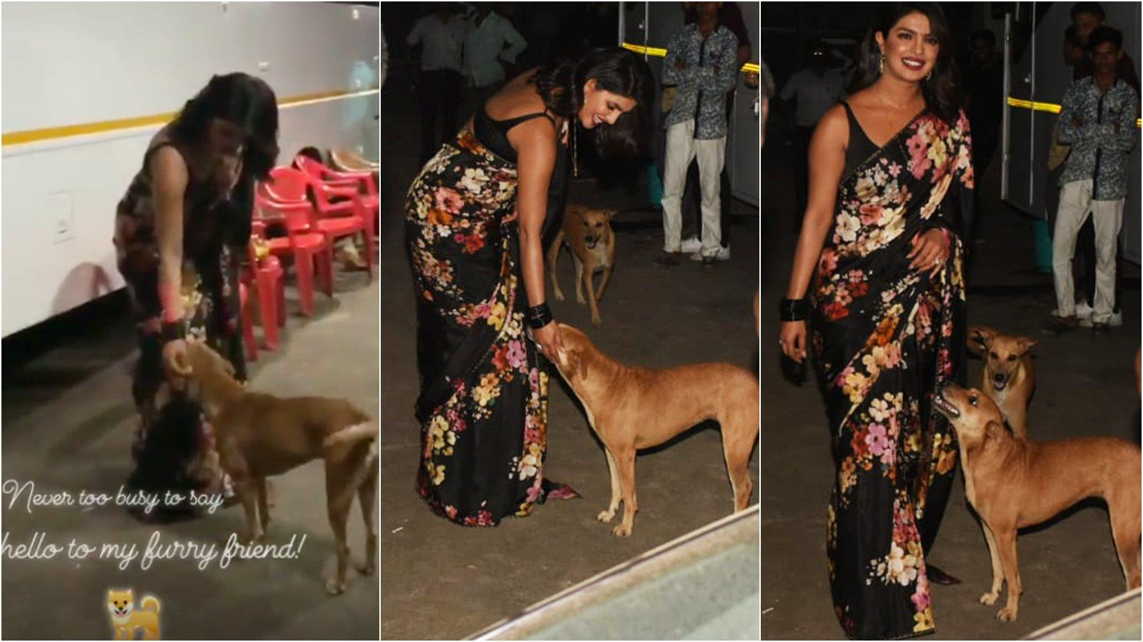 Priyanka Chopra pets a stray dog during 'The Sky Is Pink' promotion, steals the limelight in black sari