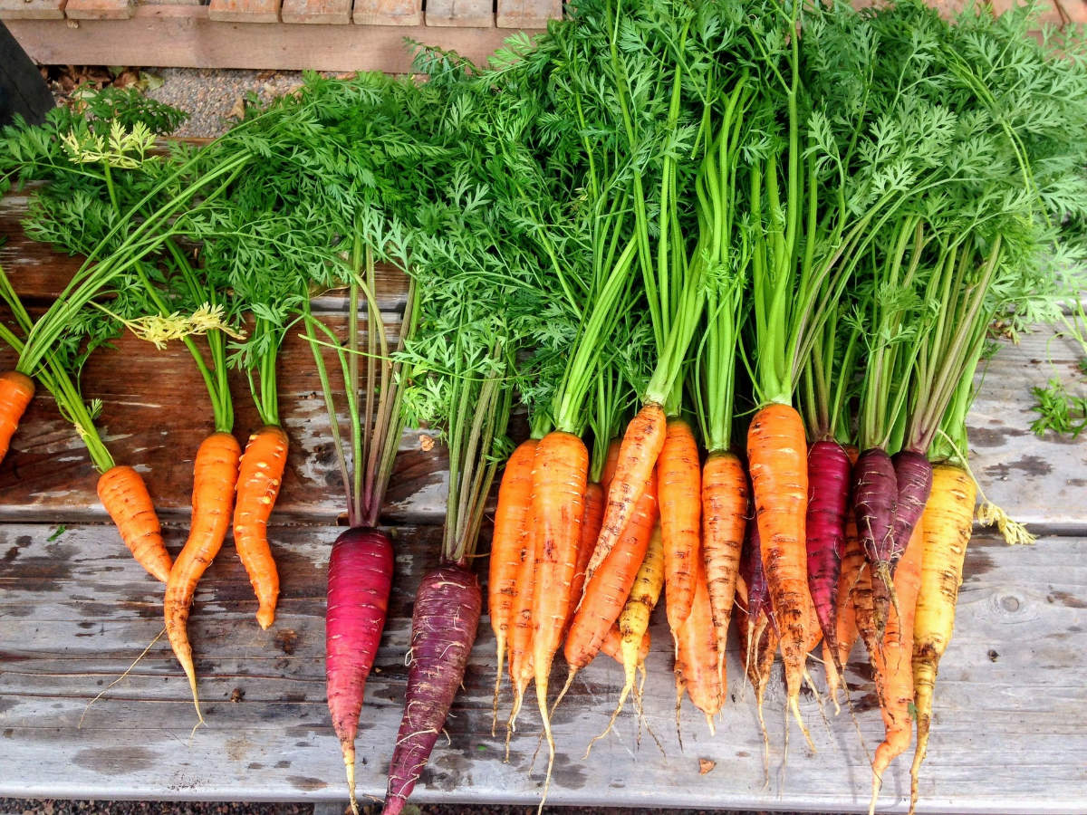 Are carrots good for eyesight? Fact or Fiction?