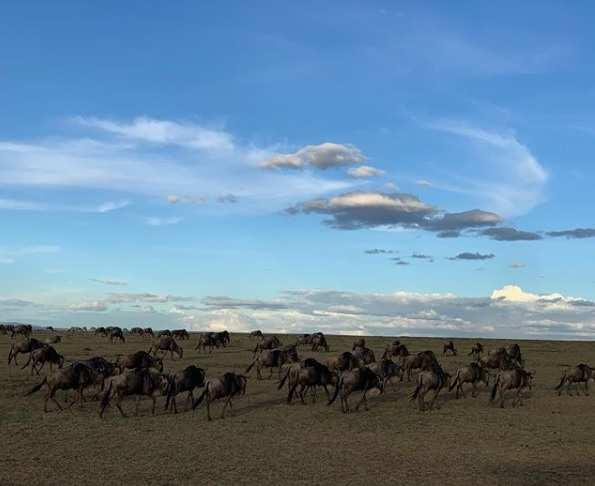 masai mara2
