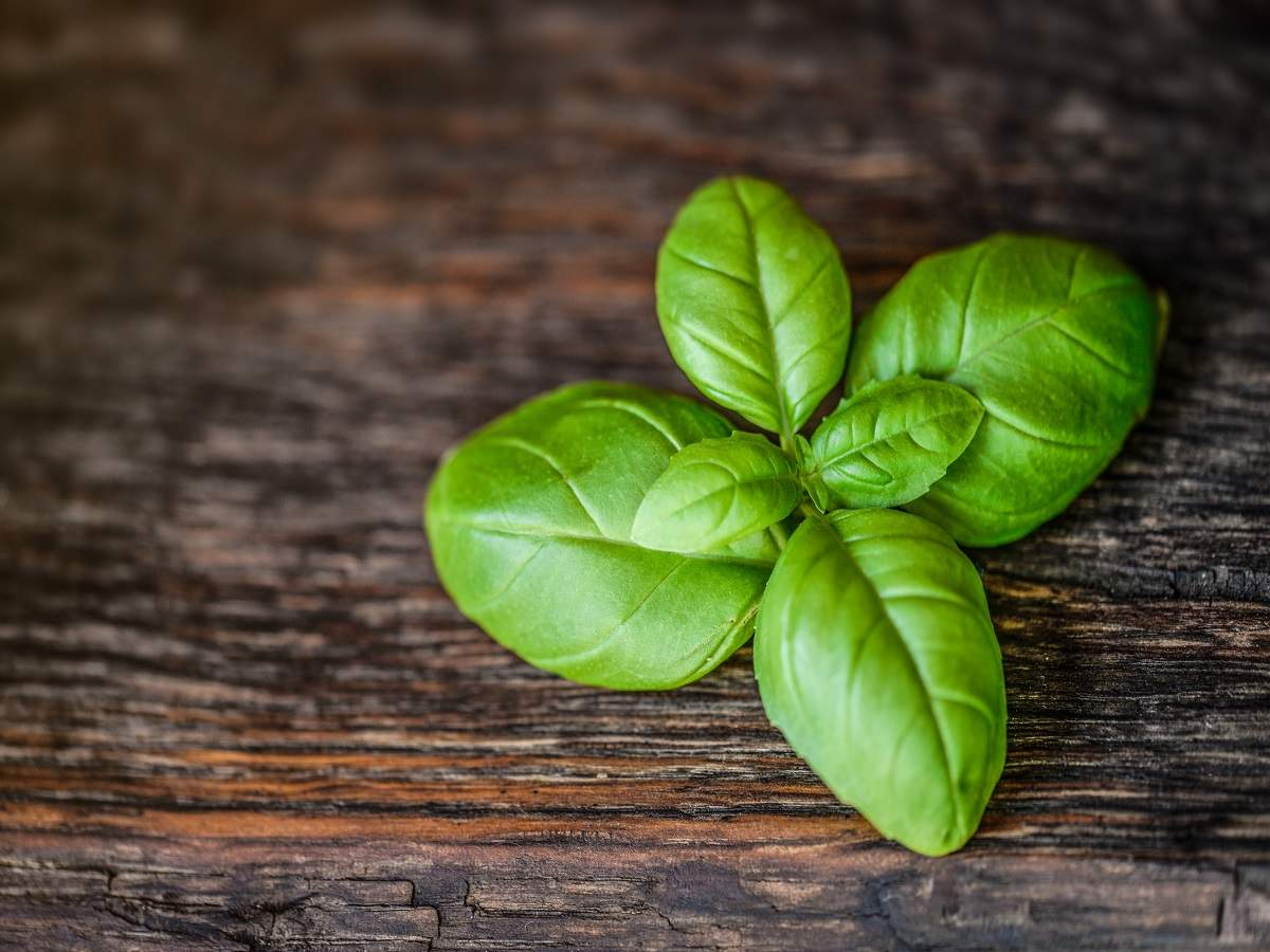 Tulsi drops: The natural immunity booster that you can easily take