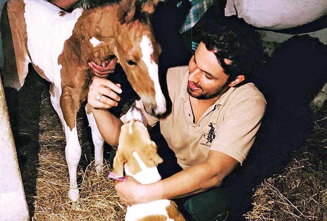 Randeep says his love for animals surpasses everything (BCCL/ @RandeepHooda)