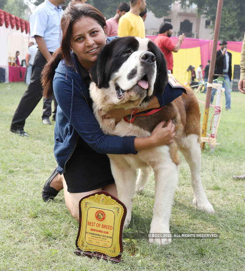 A dog's day all the way in Lucknow