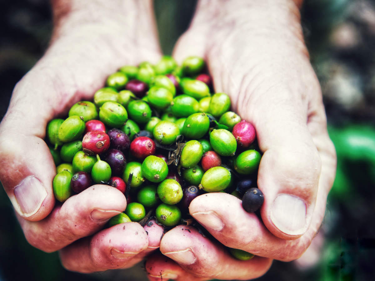 Green Coffee For Weight Loss How Effective Is Green Coffee For