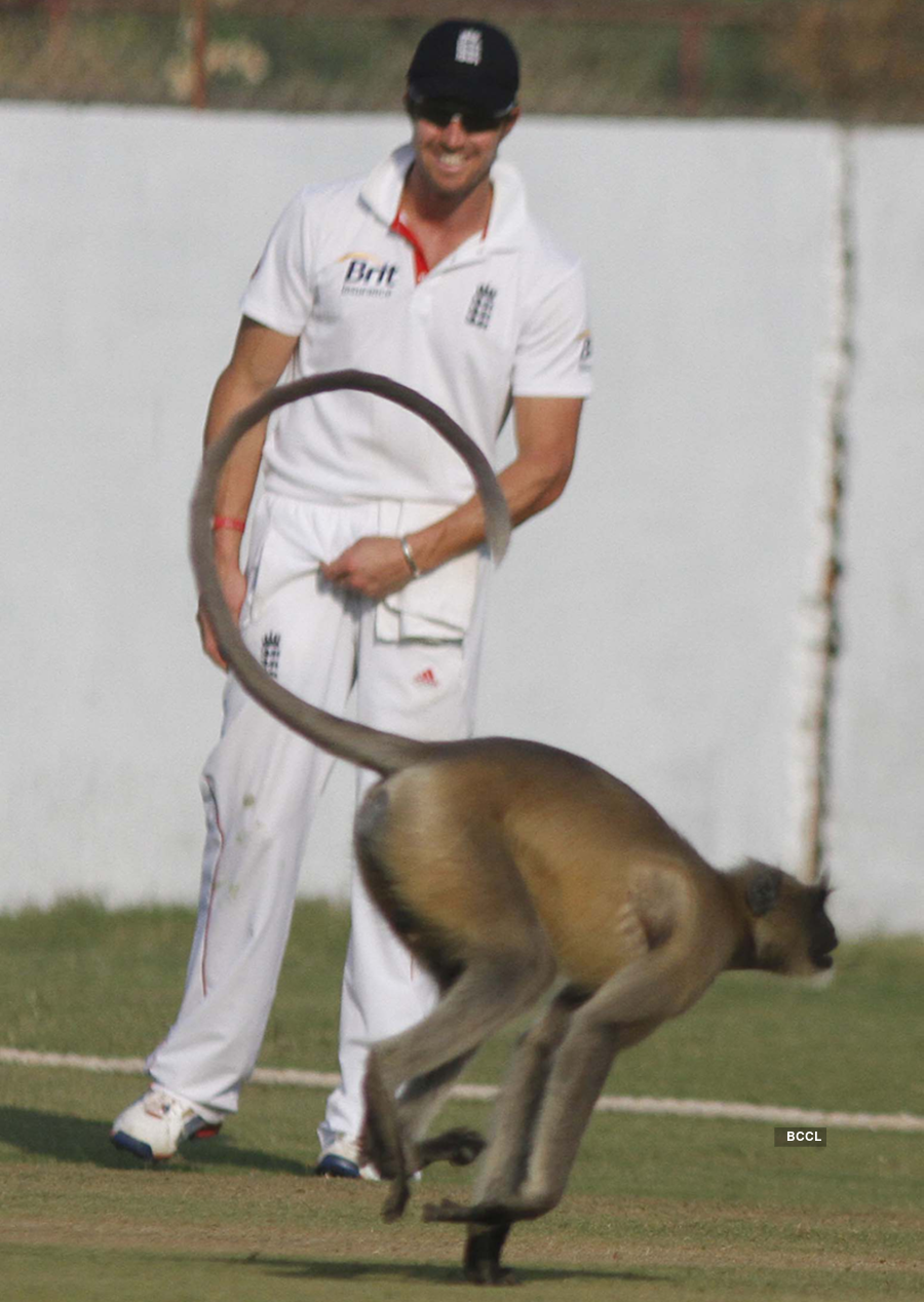 Hilarious and shocking pictures of cricket matches interrupted by animals, birds and insects