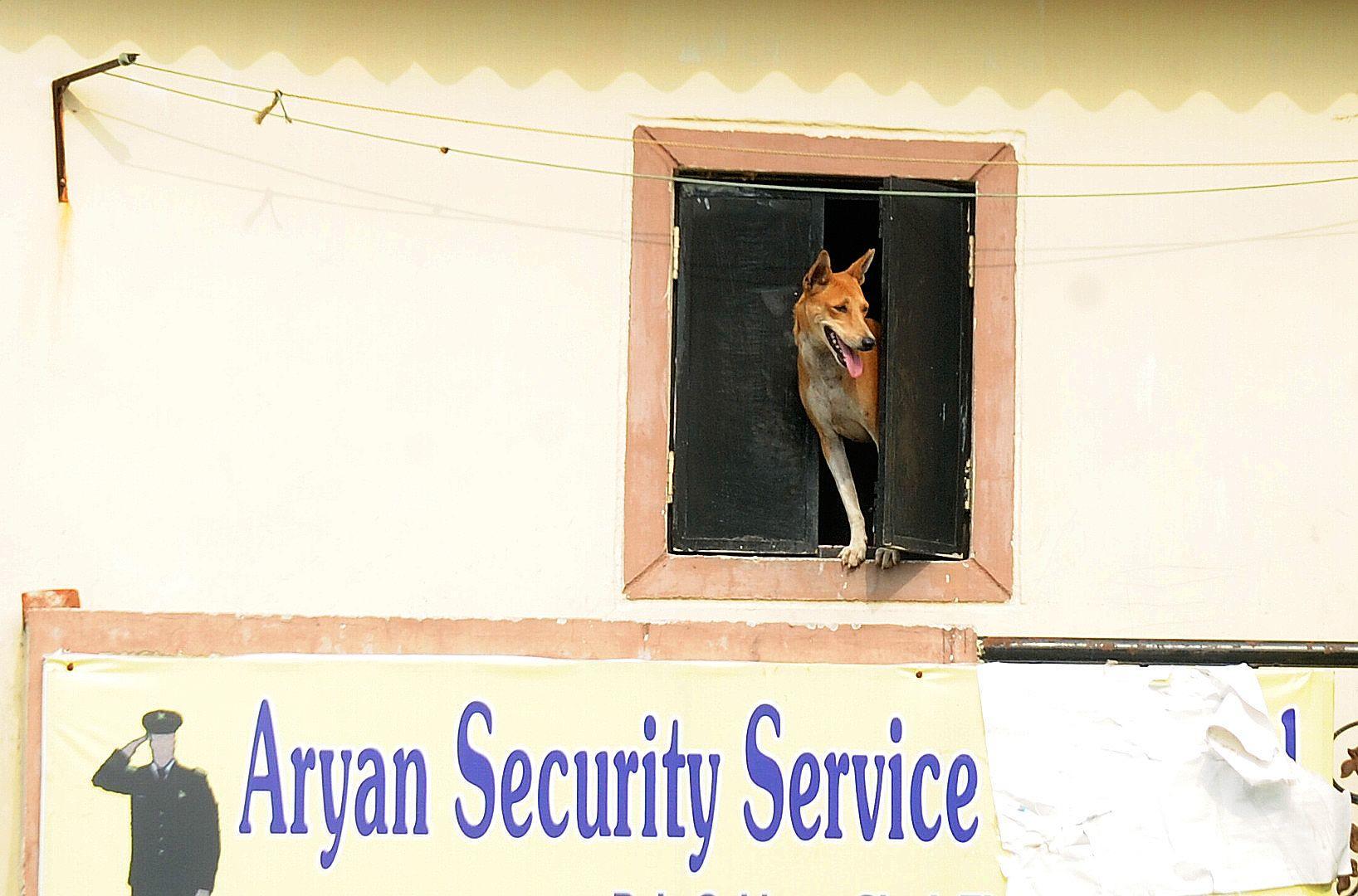 Security_Dog