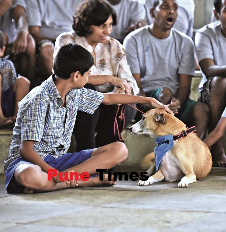 pt_therapy dogs (2)