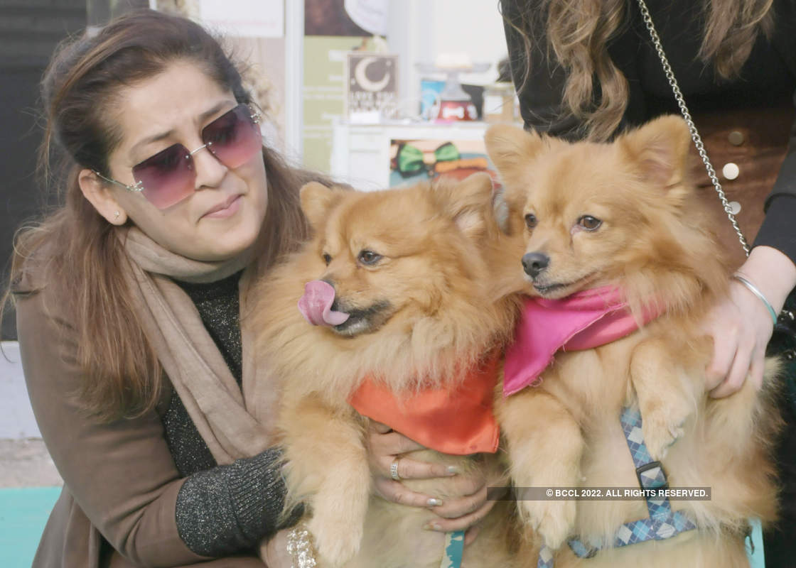 Pets have best time of their lives at this fest