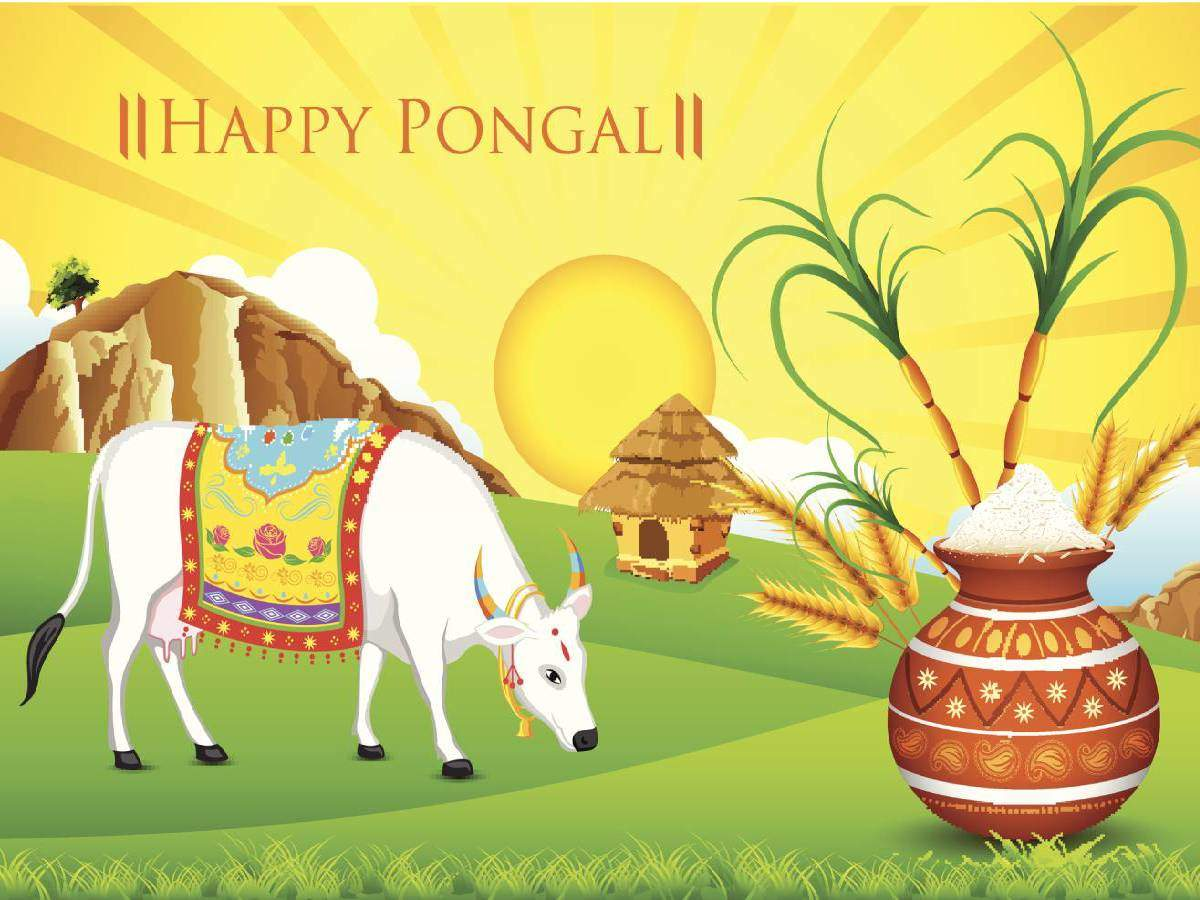 Happy Pongal 2020: Pictures, GIFs and Wallpapers