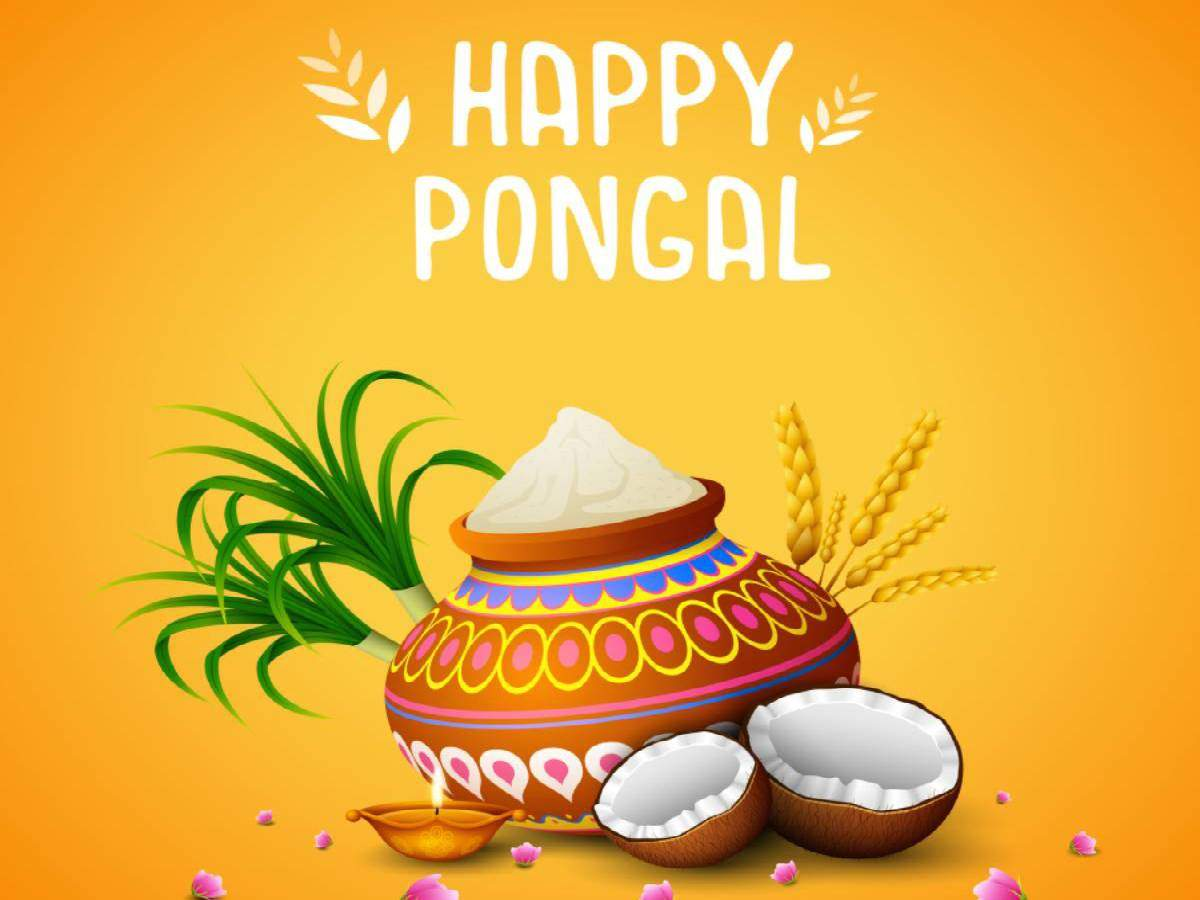 Happy Pongal 2020: Images, Quotes, Pictures