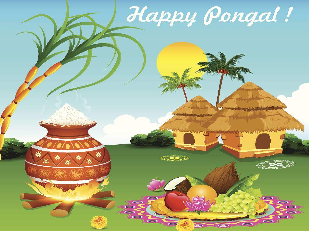 Happy Pongal 2020: Messages, Greetings, Wallpapers