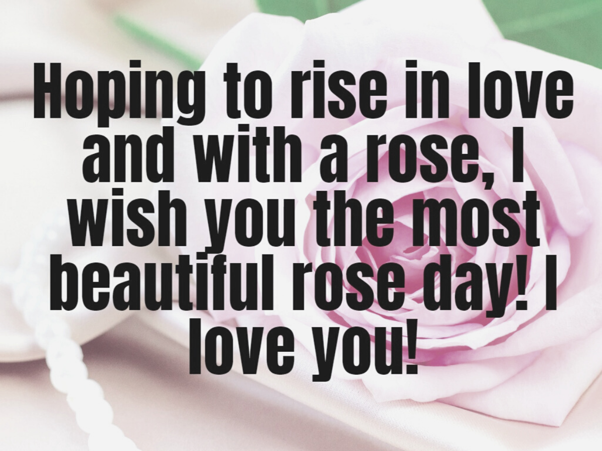 Happy Rose Day 2020: Wishes, Messages