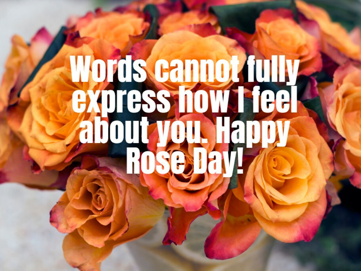 Happy Rose Day 2020: Messages, Quotes