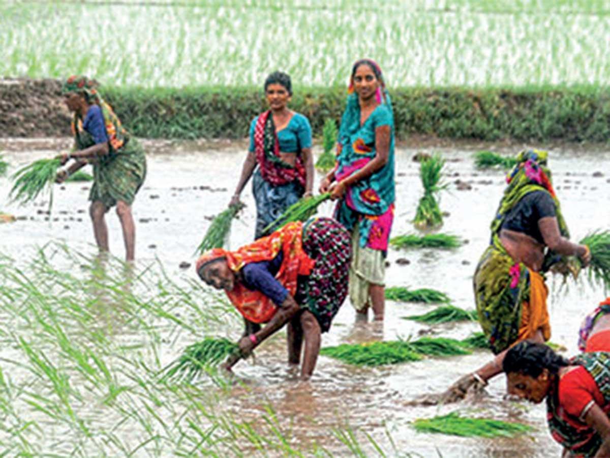 Over 70 lakh youth trained under Pradhan Mantri Vikas Yojana 2.0