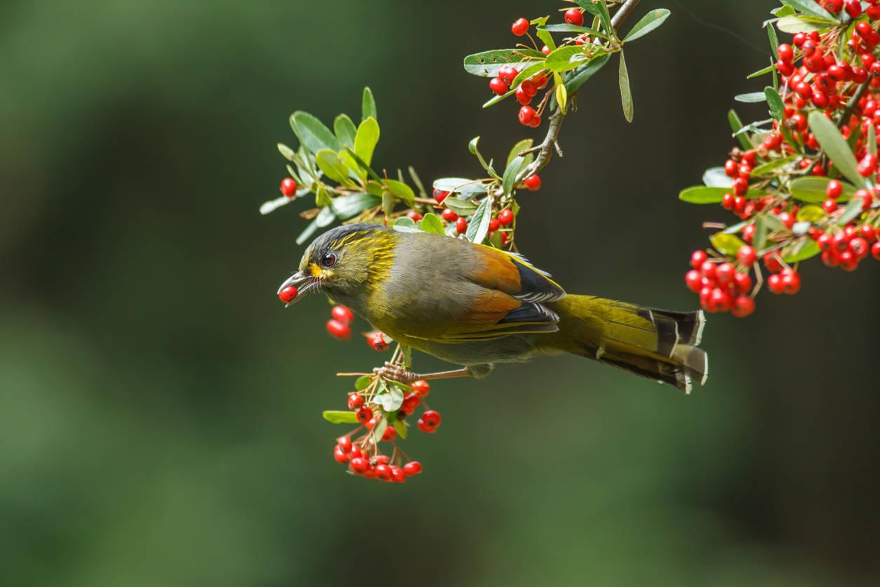 Arunachal Pradesh: Tribal turns this village into a bird ...