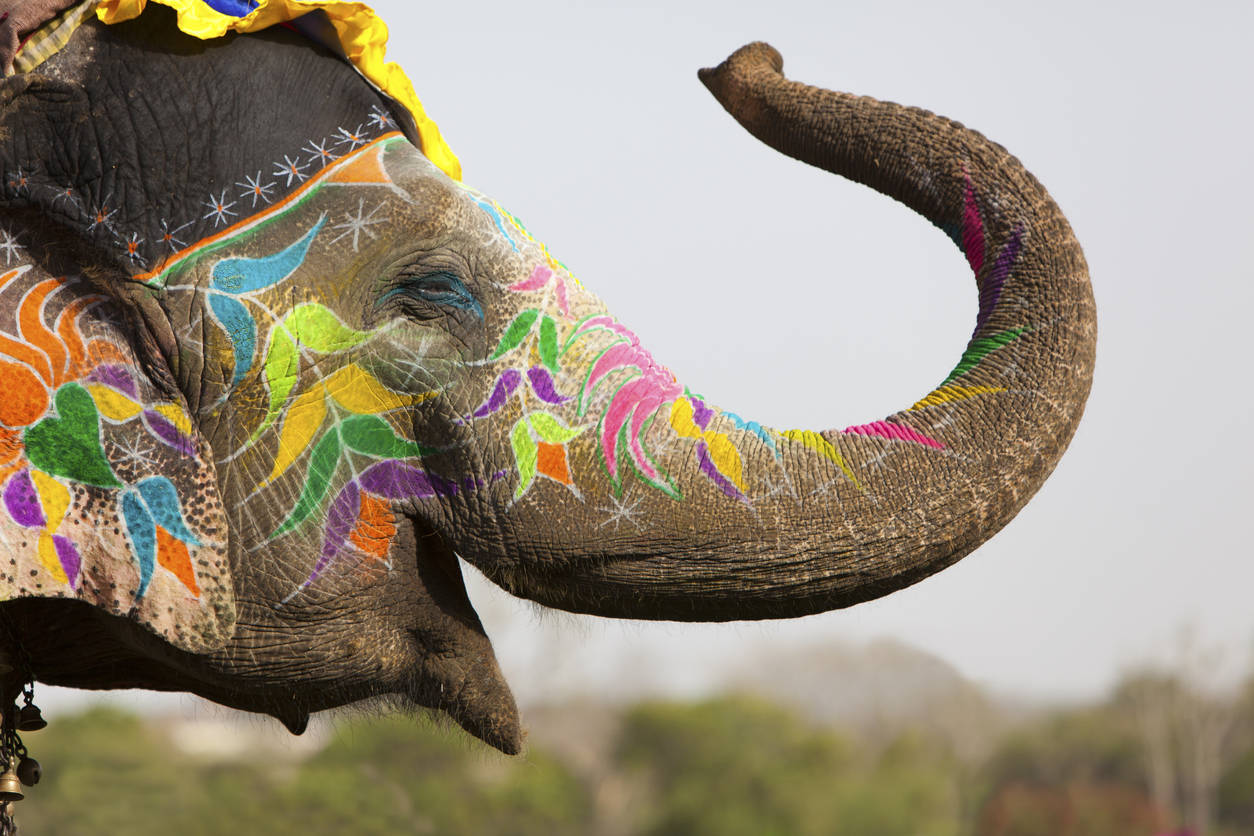 Elephant Festival in Jaipur to be celebrated on March 10