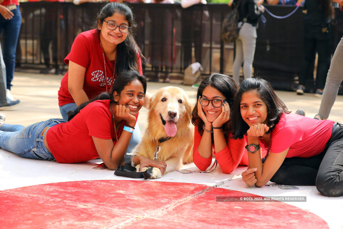 When pets paraded through city's college campus