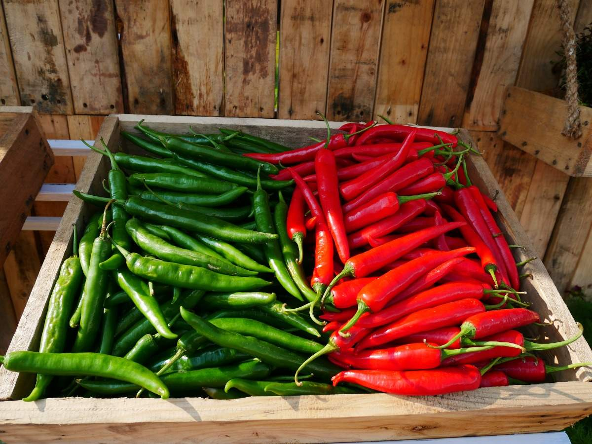 Green chilli vs. Red chilli: Which is healthier for you? | The Times of India