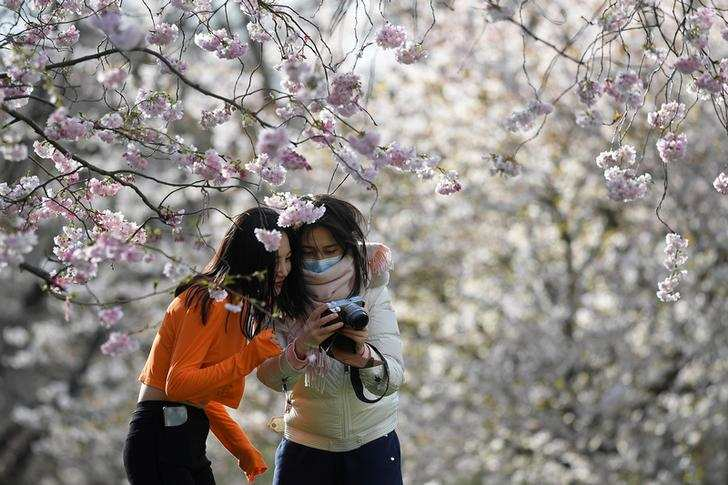 Spring: Stunning pictures of cherry blossoms blooming around the world