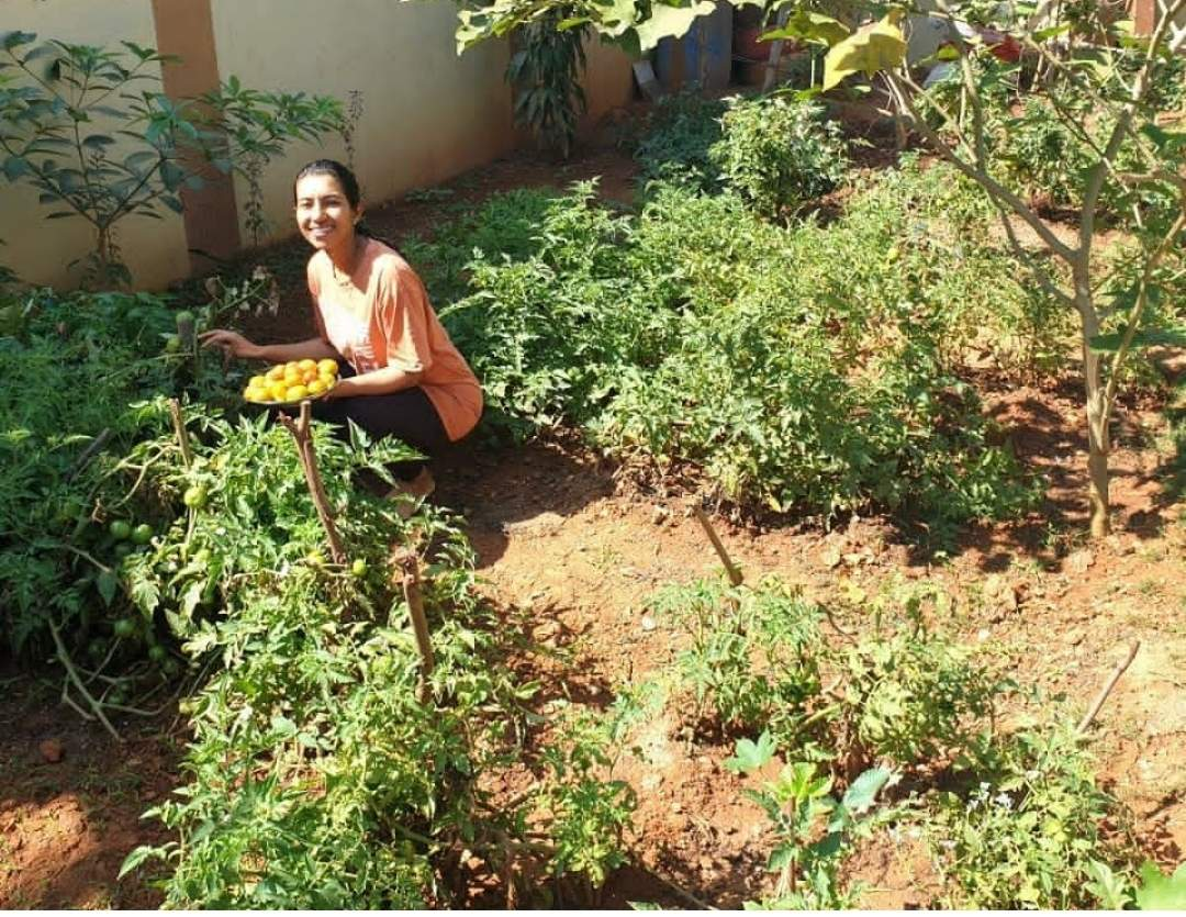 Chhavi Goyal has currently planted some sunflowers in her garden in Benaulim