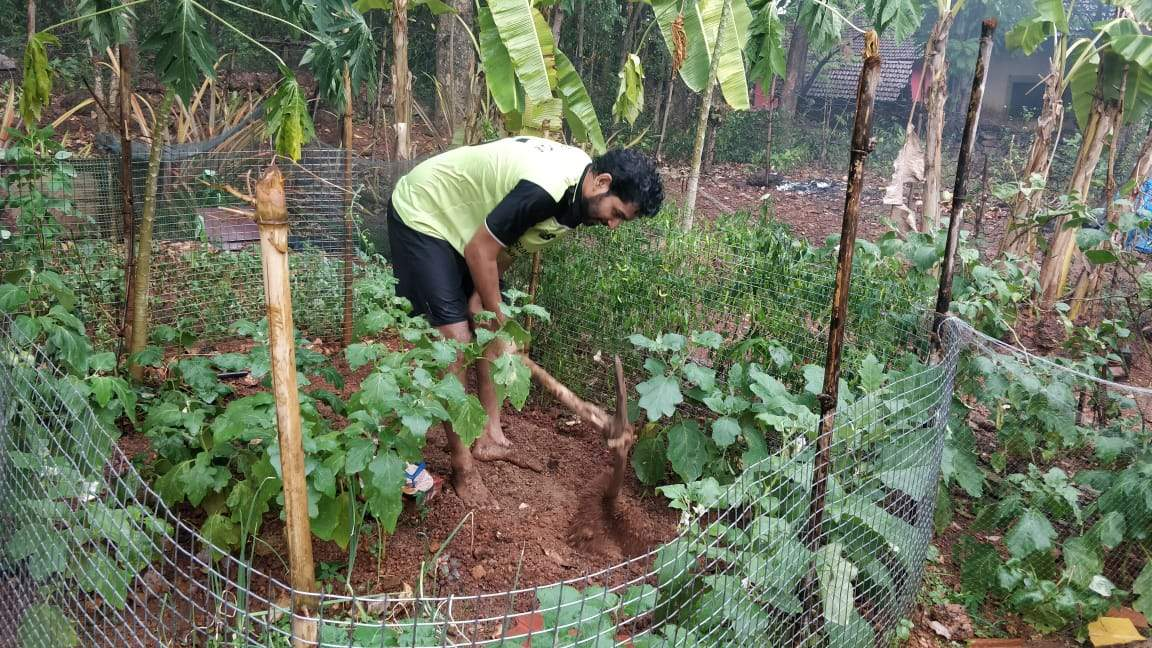 Alan dcosta planting chilies, ladyfingers and aubergines in his garden in chandor 3