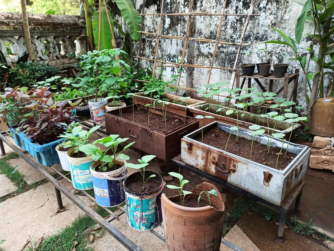 Anjali has used old trunk suitcases, empty paint buckets to make her veggie garden
