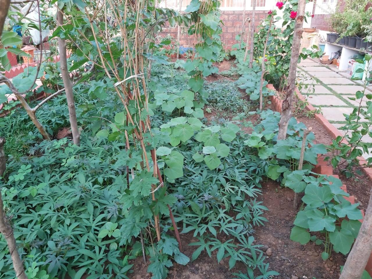 shilpa's garden in Mapusa