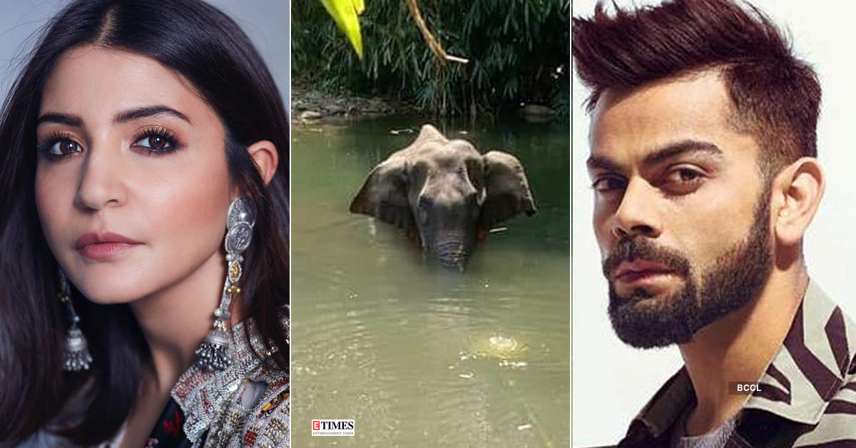 Kerala elephant tragedy: Celebrities demand strict action against animal cruelty