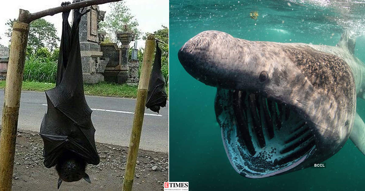 These mystifying pictures of unusual and rare creatures will give you the chills