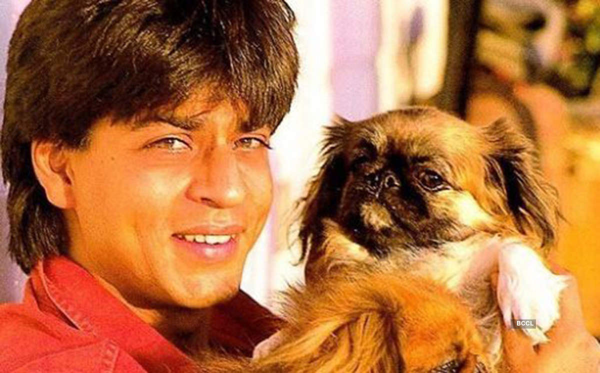 Meet adorable celebrity pet dads