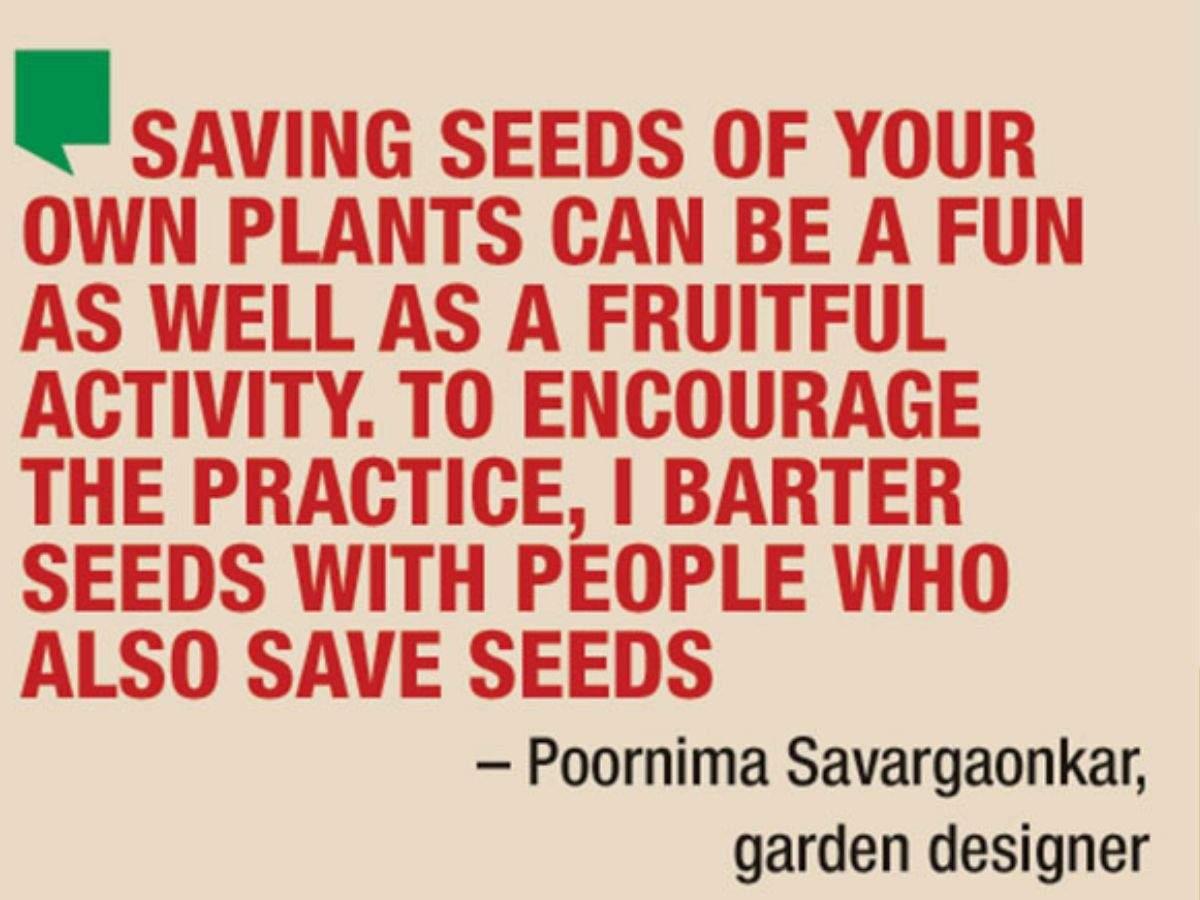 Seed saving is fun