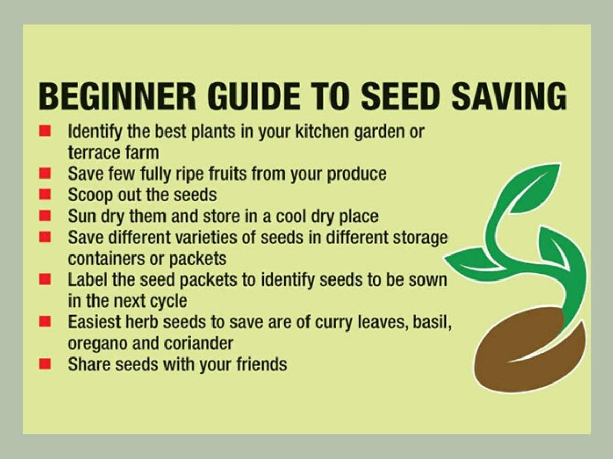 Guide to seed saving