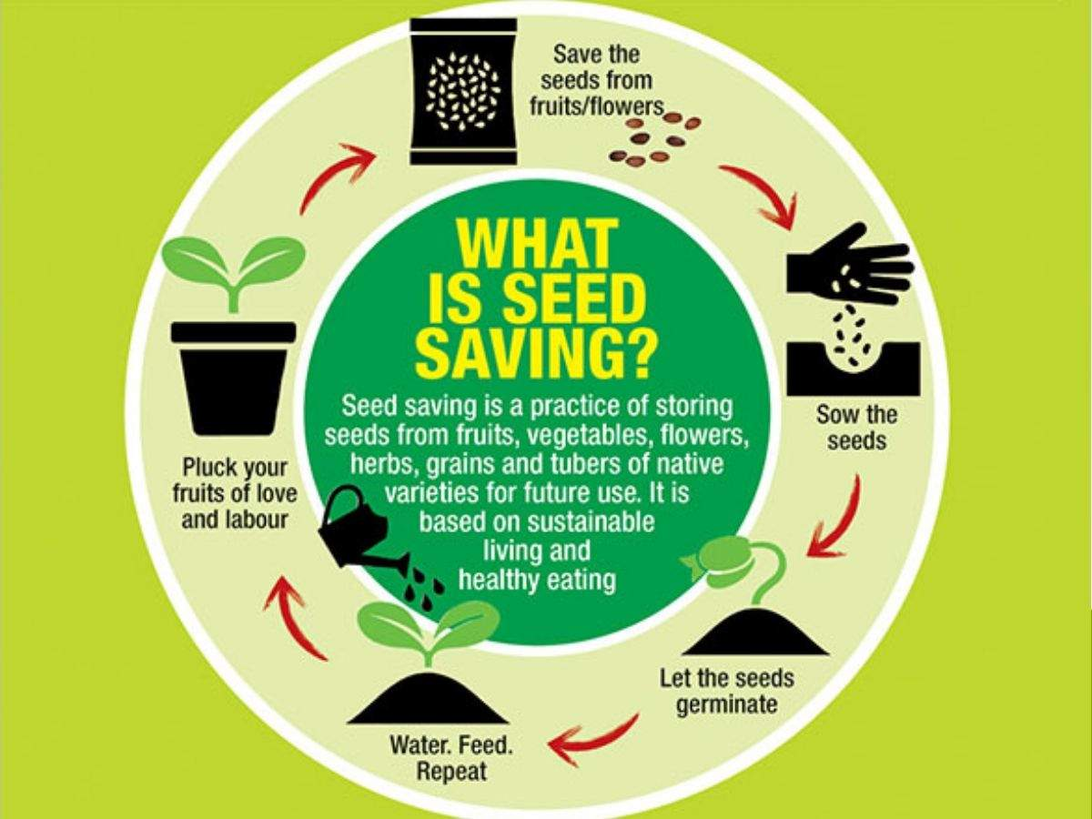 What is seed saving