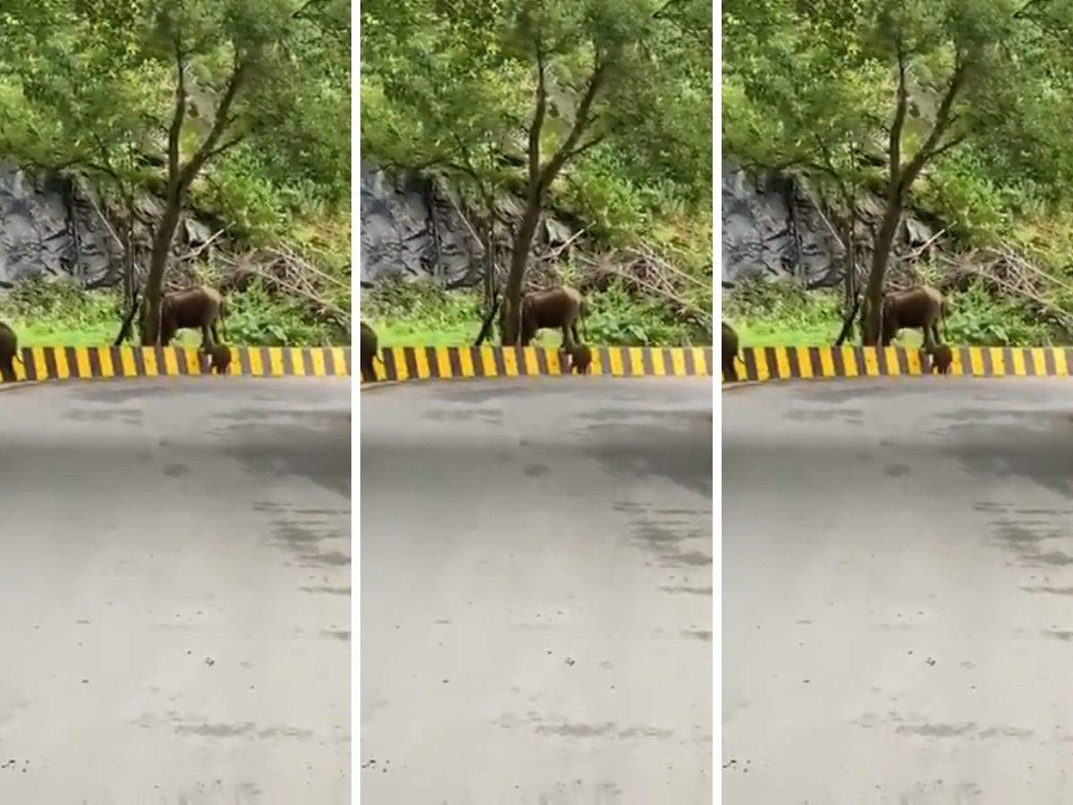 Viral Video: Mother elephant helping baby elephant on the roads