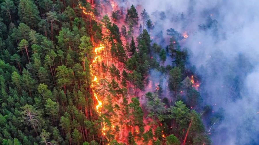 Wildfires in Siberia burn an area larger than Greece