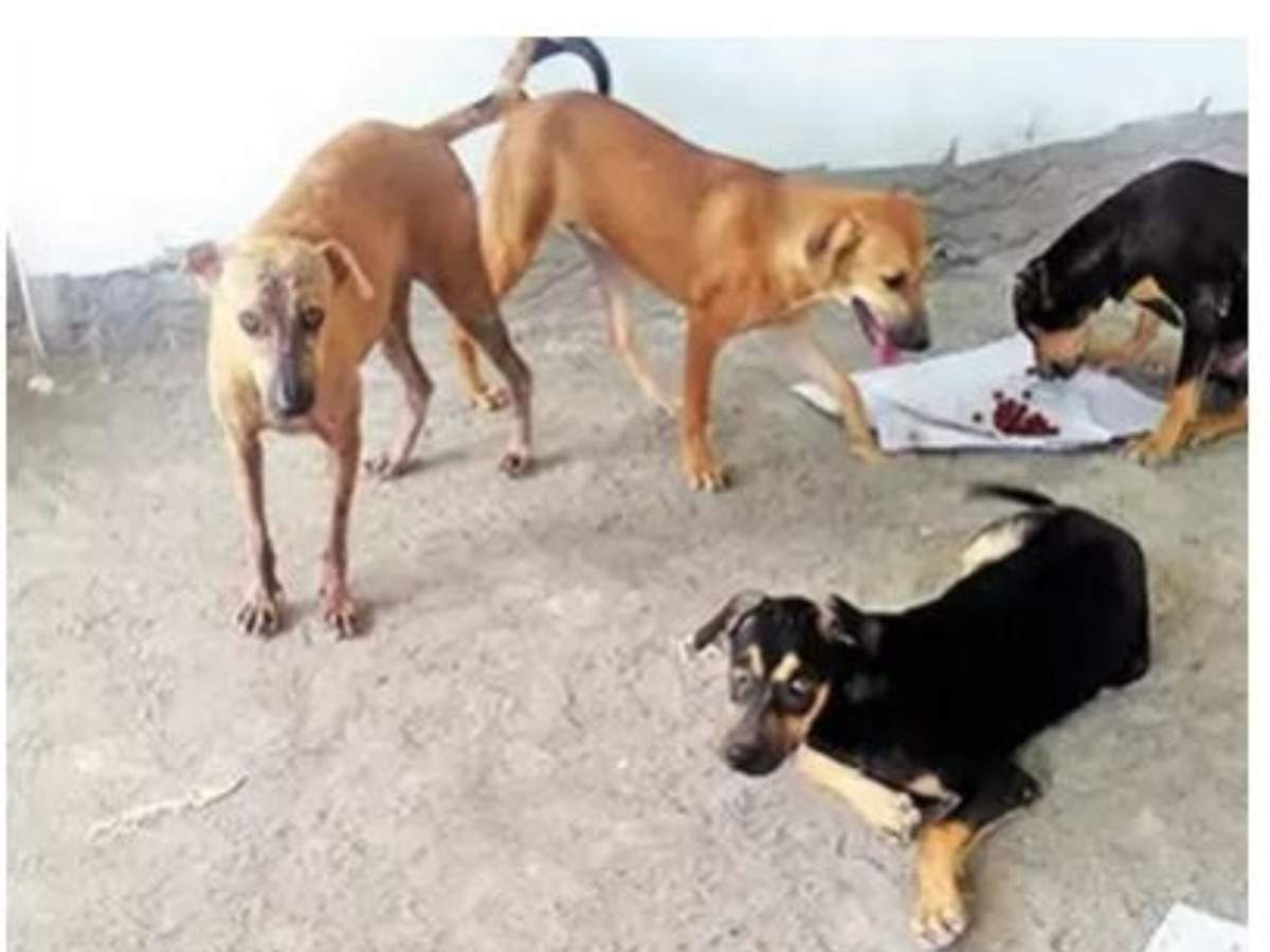 IGNOU to offer PG Diploma in Animal Welfare in Open and Distance Learning mode