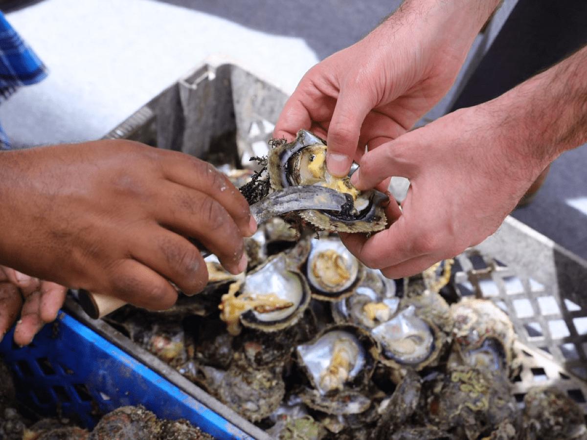 Pearl oyster shucking  Credit_ DANAT.jfif