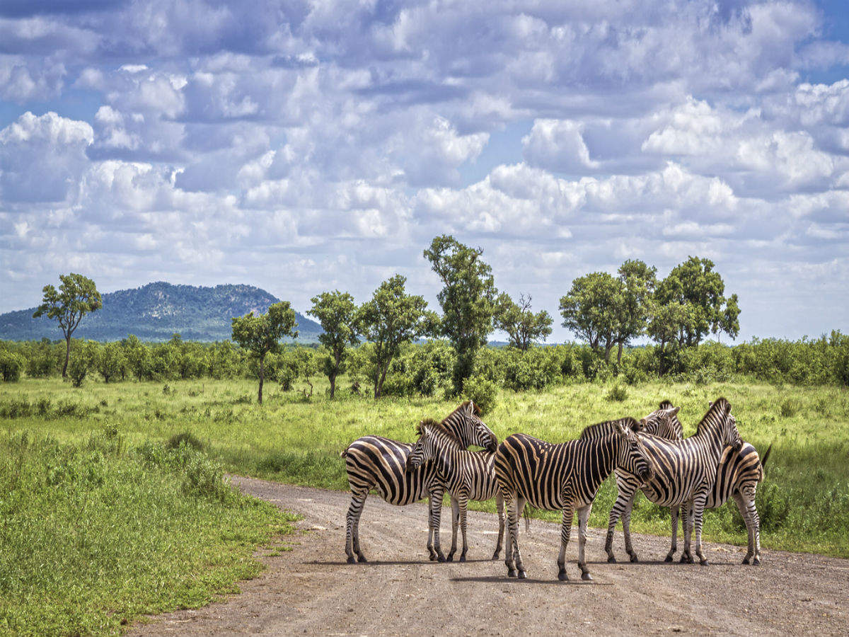 South Africa to welcome overseas travellers from October 1