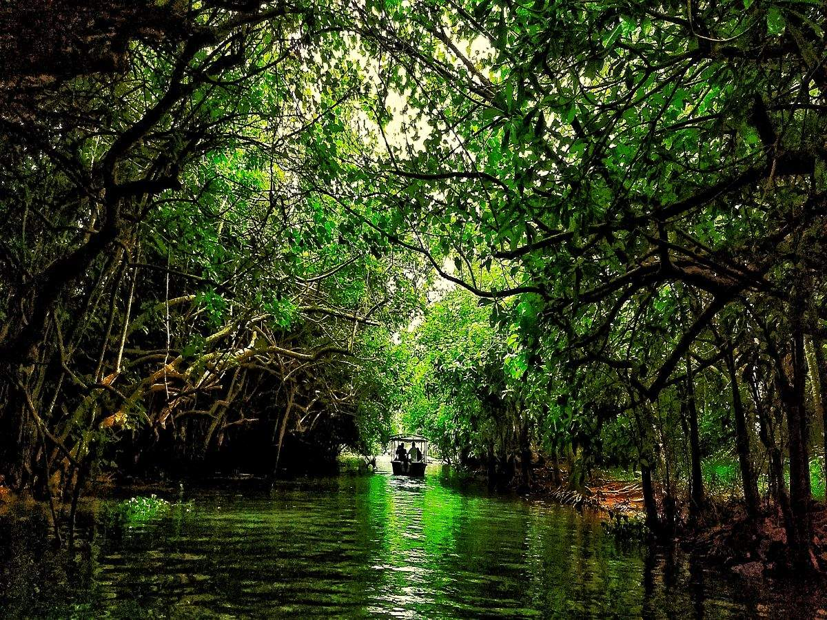 Enjoy Kerala's scenic backwaters in water taxis from October 2020