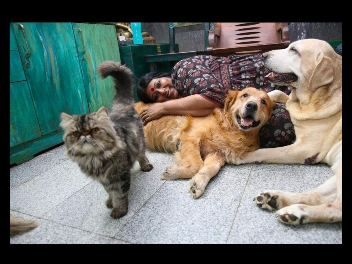Anusha Srinivasan has been sheltering 111 dogs and cats