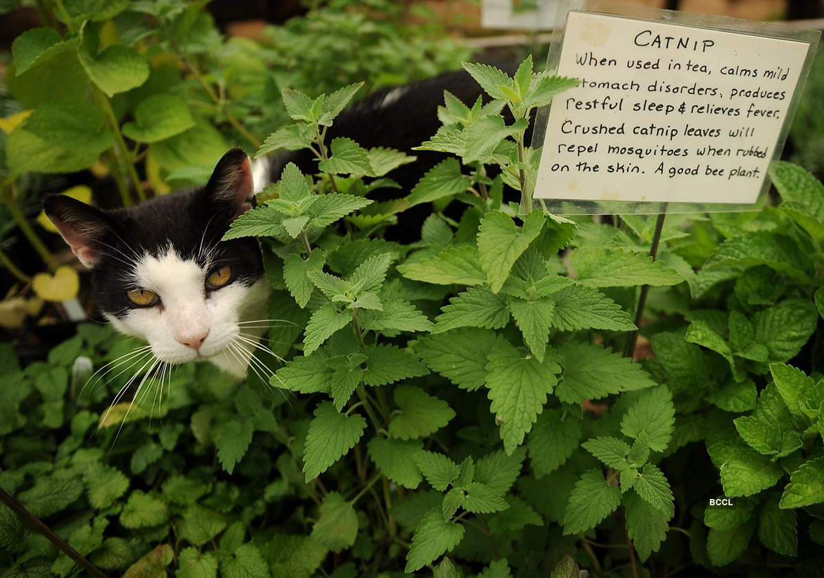 When cats are high on Catnip!
