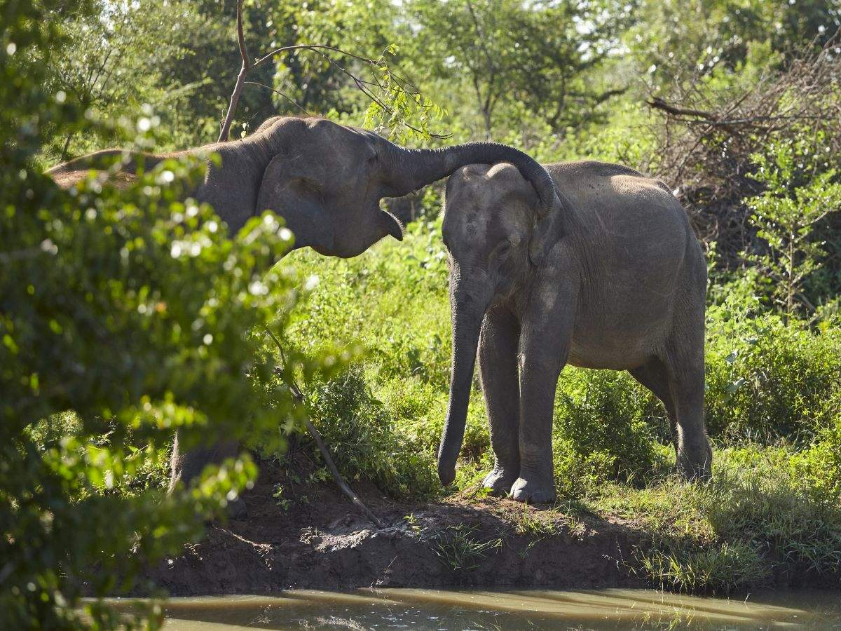 Kerala is all set to become home of world's largest elephant care-and-cure facility