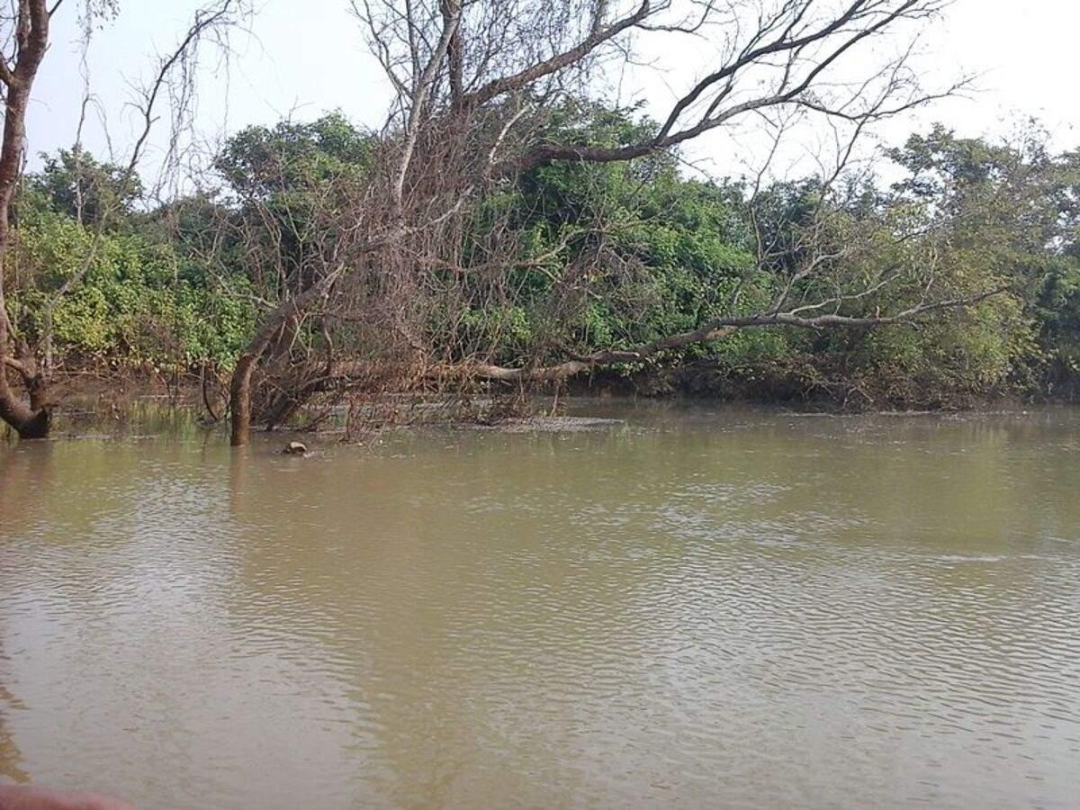 Rare migratory birds spotted at Bhitarkanika National Park in Odisha