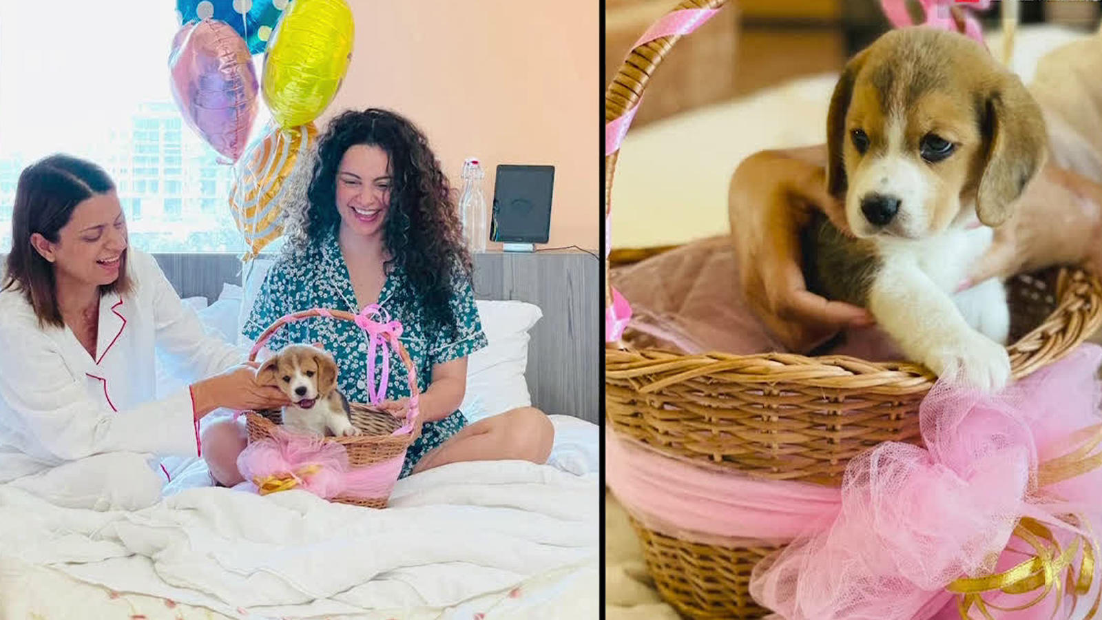 Kangana Ranaut pens the sweetest birthday wish for sister Rangoli Chandel;  gifts her a puppy; pictures inside | Hindi Movie News - Times of India