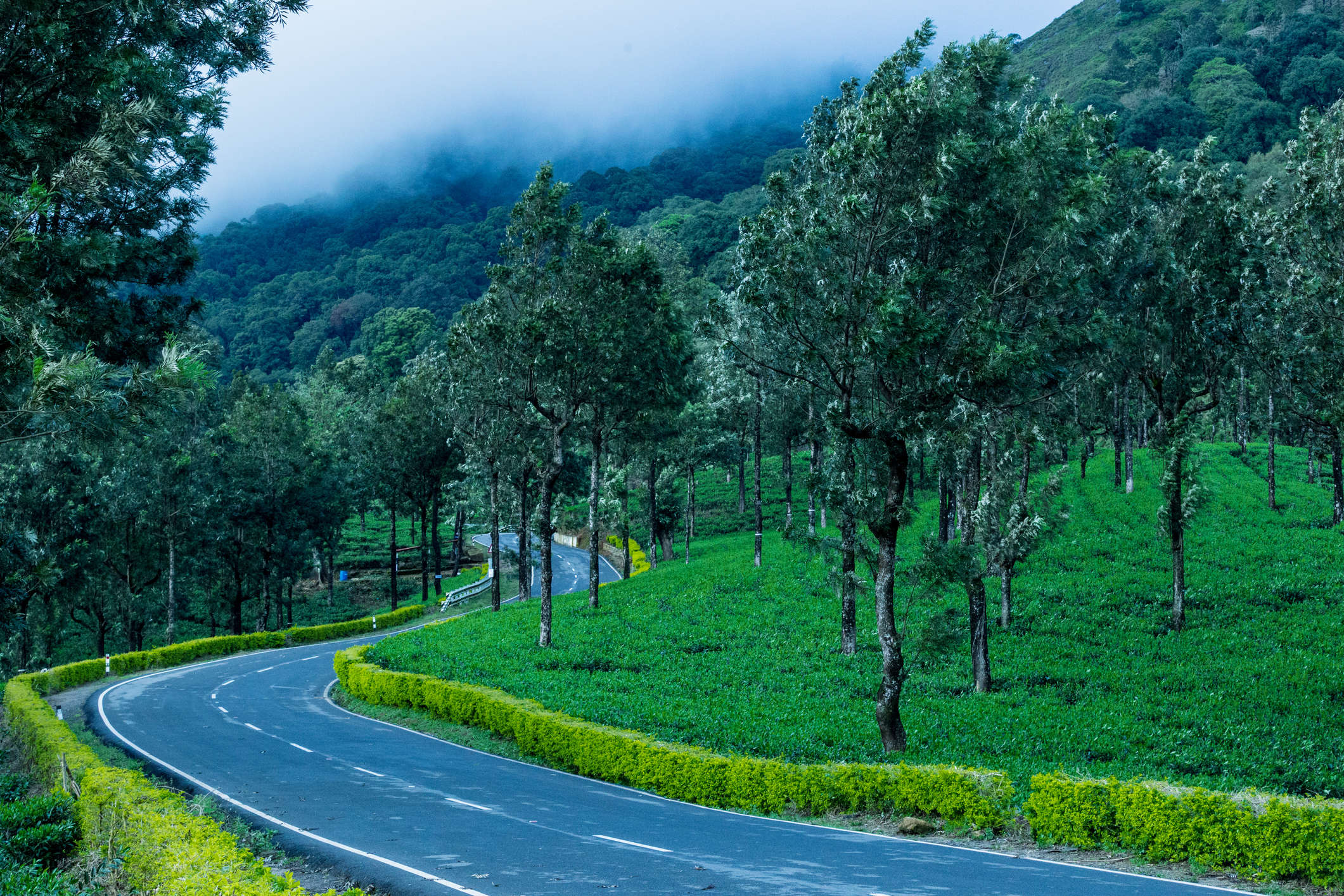 Nilgiris reopen for tourists after staying closed for eight months   Times  of India Travel