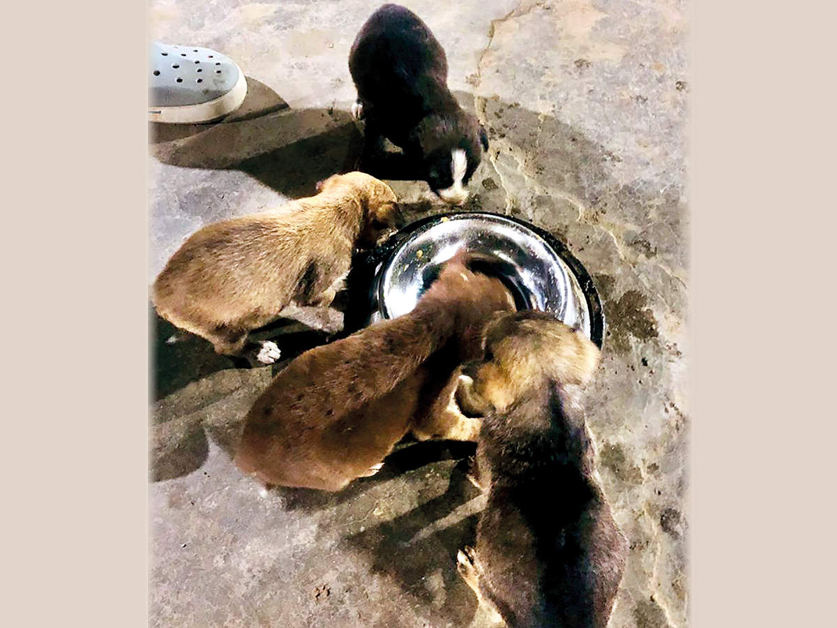 A dog lover, Tomar has fostered these stray pups and also adopted one of them (BCCL)