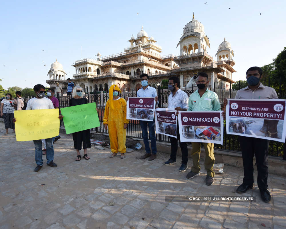 Animal rights groups demand better conditions for Jaipur's elephants