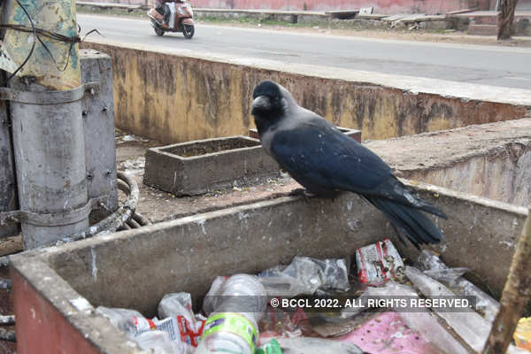 Thousands of birds die of bird flu in India