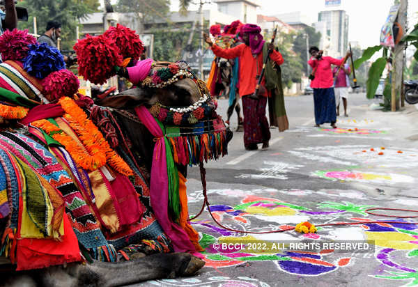 Makar Sankranti being celebrated with fervour